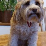 Whiskey, the Wonder Dog, loves spreading holiday cheer!